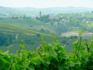 Dolci colline del Monferrato