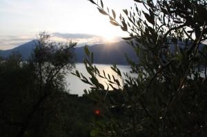 lago tra gli ulivi