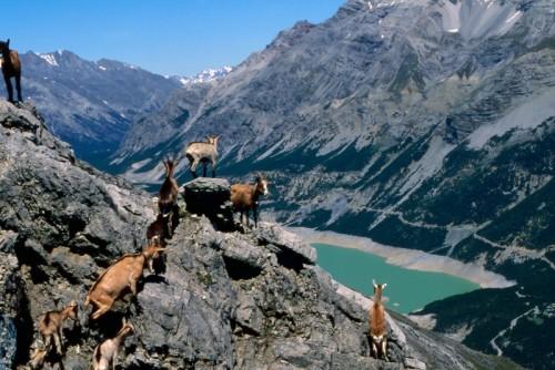 Valdidentro - I laghi di Cancano dal Monte delle Scale