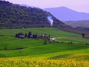 La strada provinciale del Cipressino