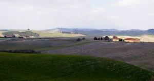 Colline di Lajatico (3)