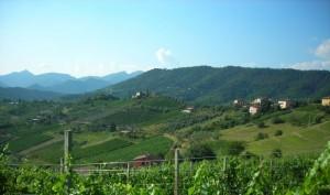 Panorama sulla frazione di Niccoloni