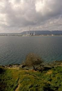 Sulla penisola… un solo albero… per il resto: Industrie !!!