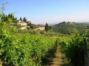 Tra vigne e castelli