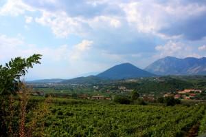 …le vigne di Solopaca e Aglianico
