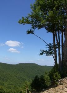 Panorama silano