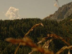alpi feltrine