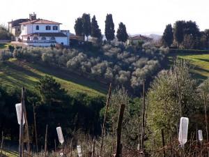 Ceppaiano (2)