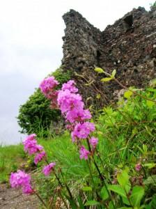 Rocca e fiori