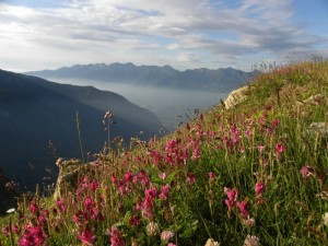 Pascoli estivi in Val Cenischia