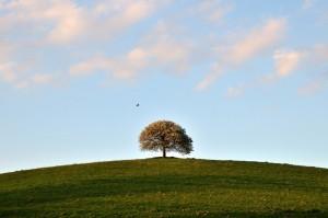 albero solitario nella campagna romana