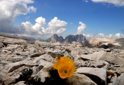 Selva di Val Gardena - La forza della vita