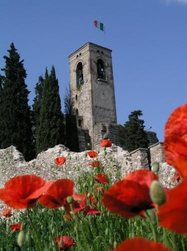 Cavriana - Torre e papaveri