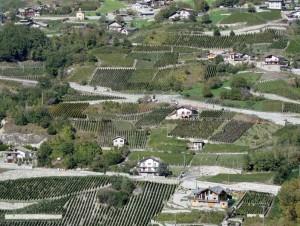 Chambave e le sue vigne