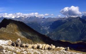 Panorama della Valmalenco dal lago di Arcoglio
