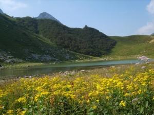 Il lago branchino tra i fiori