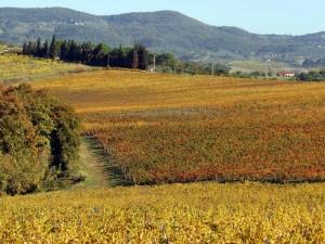 la via castiglioni1