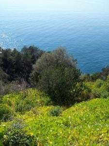 sentiero azzurro verso bonassola