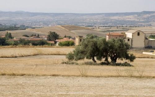 Setzu - Pace tra gli ulivi: Setzu