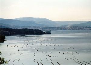 Trieste dalla Costiera