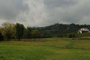 San Marzano oliveto