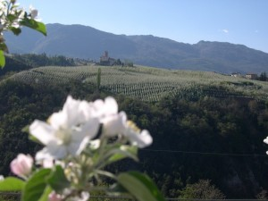 Il castello tra i fiori 3