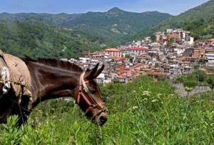 Antillo