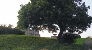 Bernini con la sua Fontana - Riserva Naturale Regionale di Canale Monterano