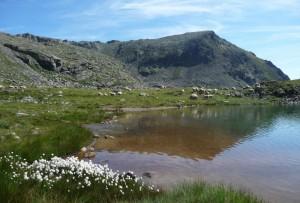 Lemie, laghi d'Ovarda (gregge al lago Grande)