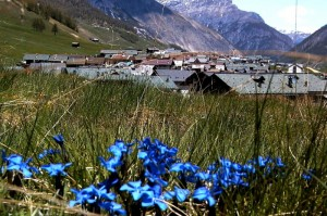…sdraiato sul prato al di là delle genziane vedo i tetti di San Rocco di Livigno