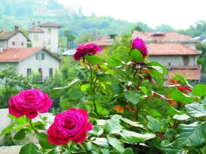 La Rosa Di Miasino