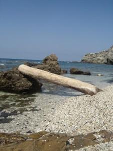 un angolino riservato delimitato da un tronco..chissà da dove arriva