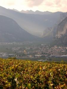 tardo pomeriggio tra le vigne