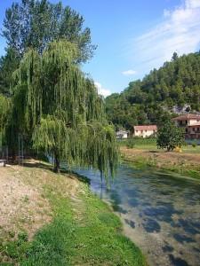 salice sul fiume Nera