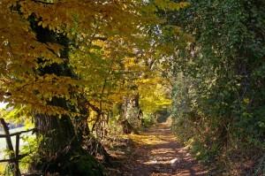 autunno sul monte maddalena