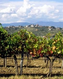 Tizzana e le vigne del Montalbano