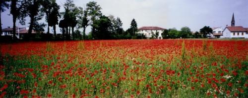 Mareno di Piave - Mare ... rosso