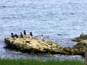 roccia dei cormorani
