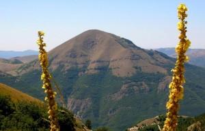 Monte Cardosa tra due steli di verbasco