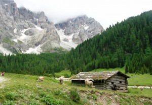Val Venegia - Il pastore solitario