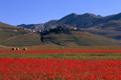Norcia - fiorita a Castelluccio di Norcia