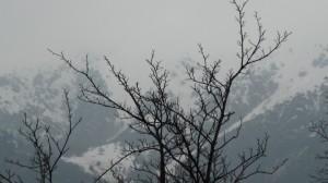 Rami invernali