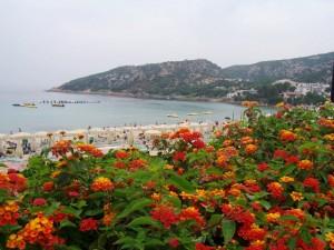i fiori di baja sardinia accerezzano il mare