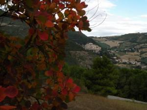 Serra San Quirico e cotinus coggygria
