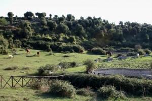 Cavalli nella dolina 100 pozzi