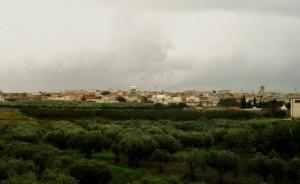 In mezzo agli ulivi