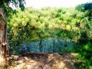 Panoramica della Fonte del fiume Ciane