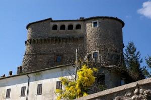 La mimosa in contrasto con il castello