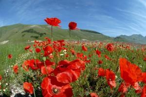 Italia in fiore a Castelluccio di Norcia