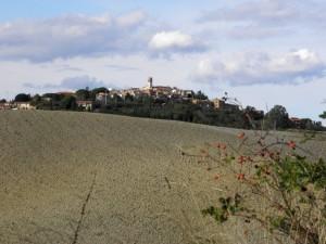 Bacche rosse sulla via del vino